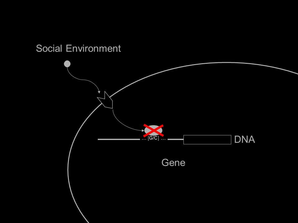 Social Environment Gene IL6 … [G/C] … DNA