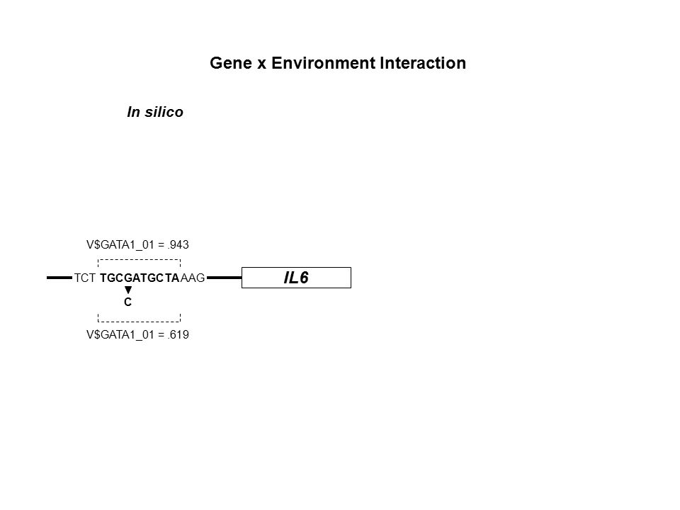 IL6 TCT TGCGATGCTA AAG C V$GATA1_01 =.943 V$GATA1_01 =.619 Gene x Environment Interaction In silico