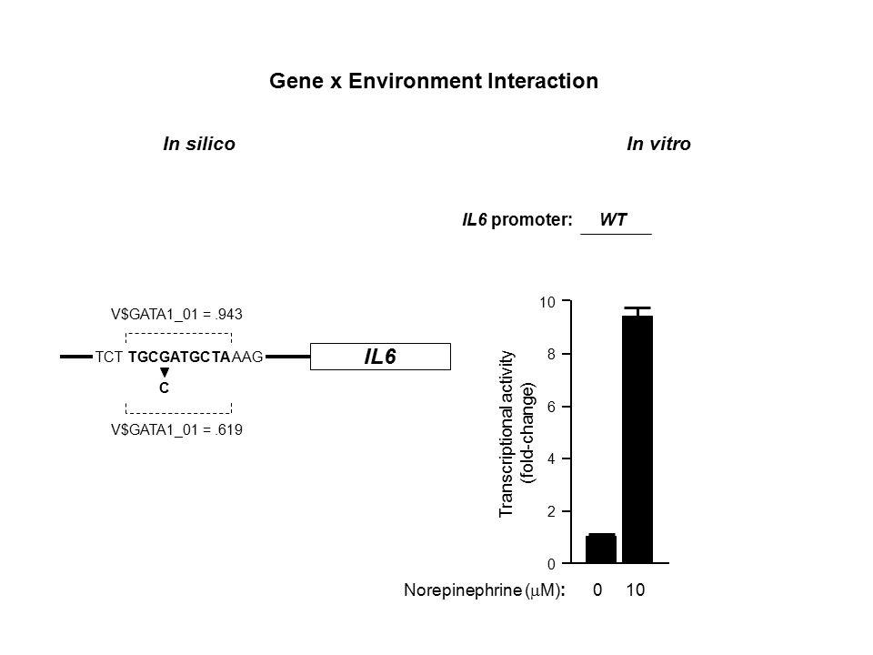 Transcriptional activity (fold-change) 10 8 6 4 2 0 IL6 promoter: WT -174C Norepinephrine (  M): 0 10 - 0 10 IL6 TCT TGCGATGCTA AAG C V$GATA1_01 =.943 V$GATA1_01 =.619 Gene x Environment Interaction In silico In vitro