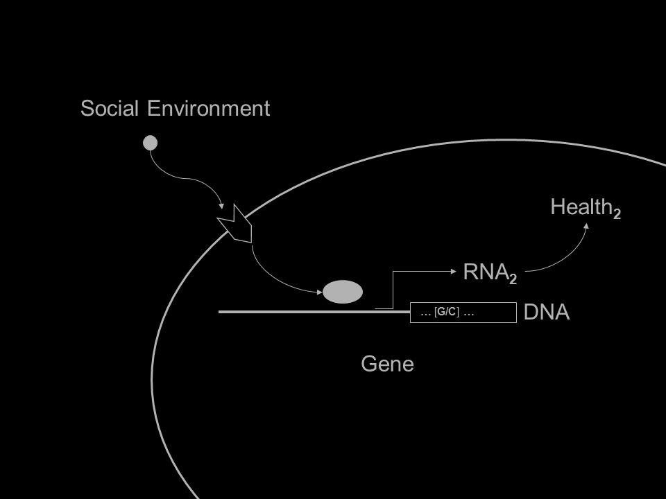 Social Environment Gene Health 2 IL6 RNA 2 DNA … [G/C] …