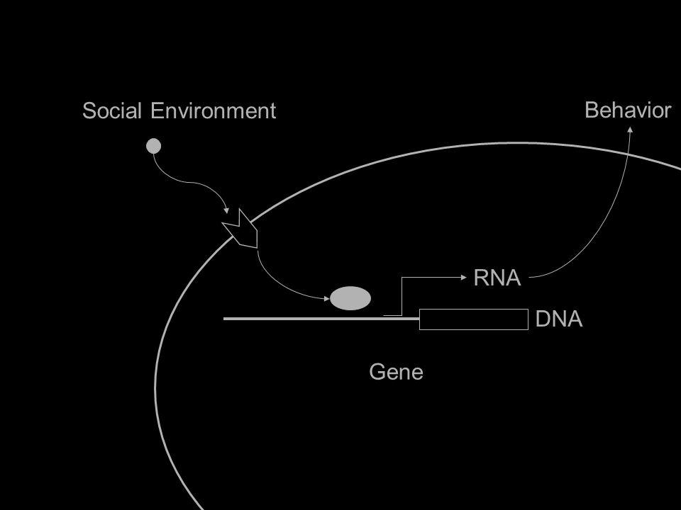 Social Environment Gene IL6 RNA DNA Behavior