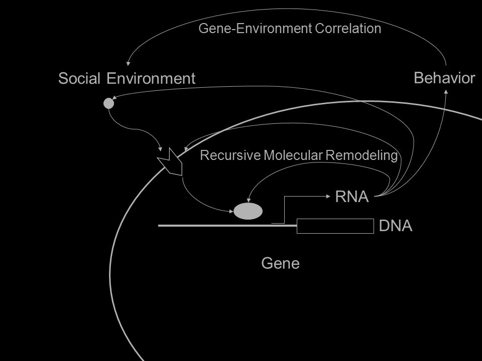 Social Environment Gene IL6 RNA DNA Behavior Gene-Environment Correlation Recursive Molecular Remodeling