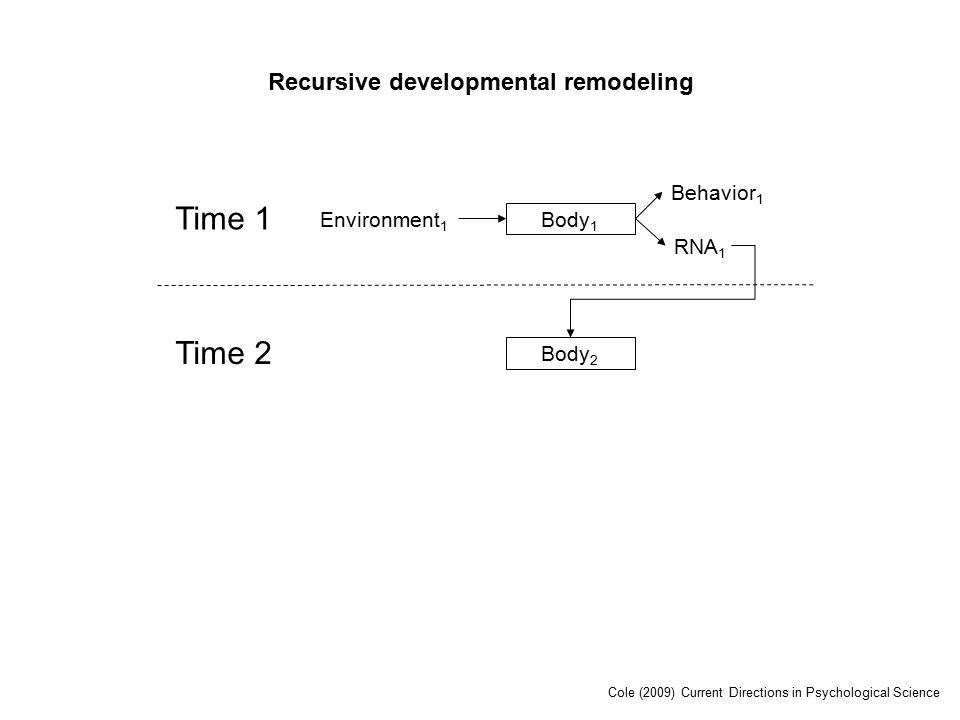 Time 1 Environment 1 Body 1 RNA 1 Behavior 1 Time 2 Body 2 Recursive developmental remodeling Cole (2009) Current Directions in Psychological Science