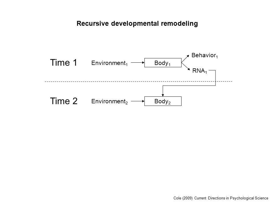 Time 1 Environment 1 Body 1 RNA 1 Behavior 1 Time 2 Environment 2 Body 2 Recursive developmental remodeling Cole (2009) Current Directions in Psychological Science