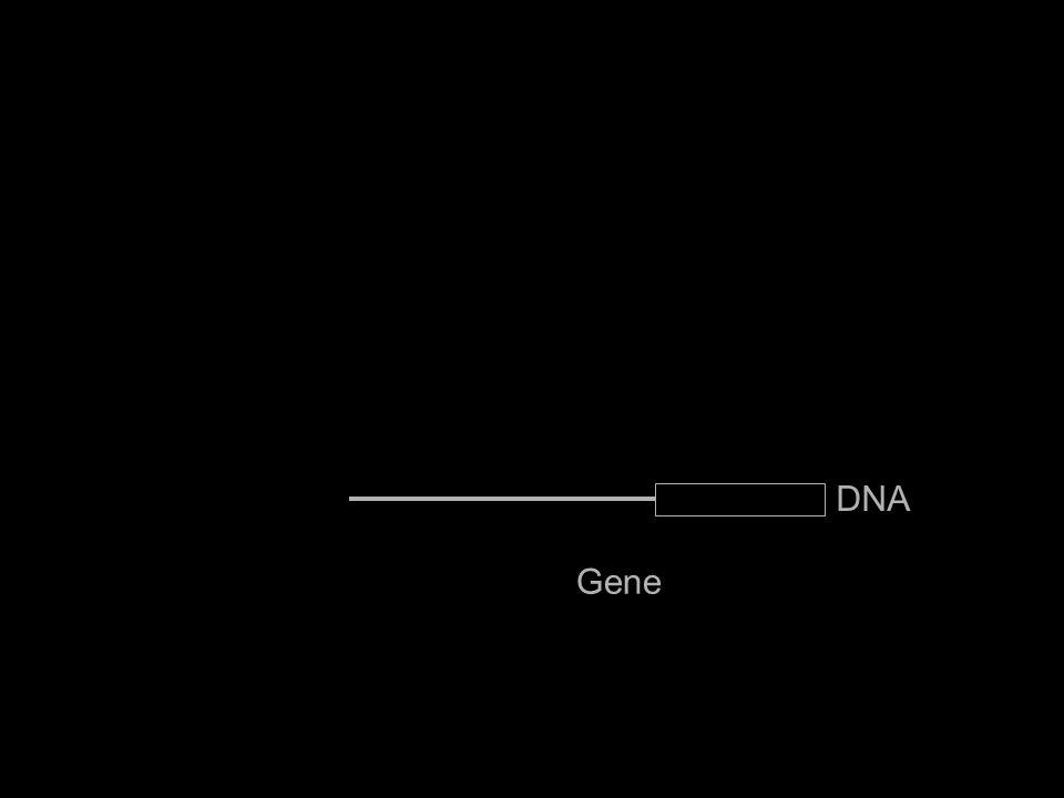 Gene IL6 DNA