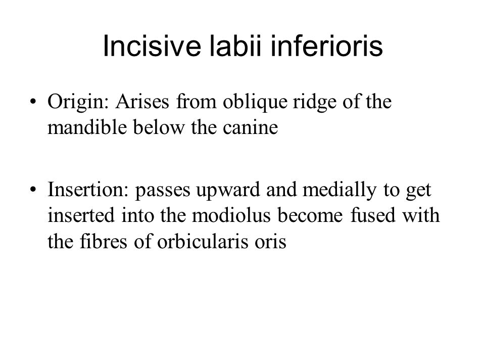 Incisive labii inferioris Origin: Arises from oblique ridge of the mandible below the canine Insertion: passes upward and medially to get inserted int