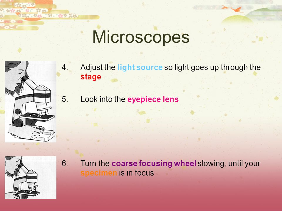 Microscopes 4.Adjust the light source so light goes up through the stage 5.Look into the eyepiece lens 6.Turn the coarse focusing wheel slowing, until your specimen is in focus
