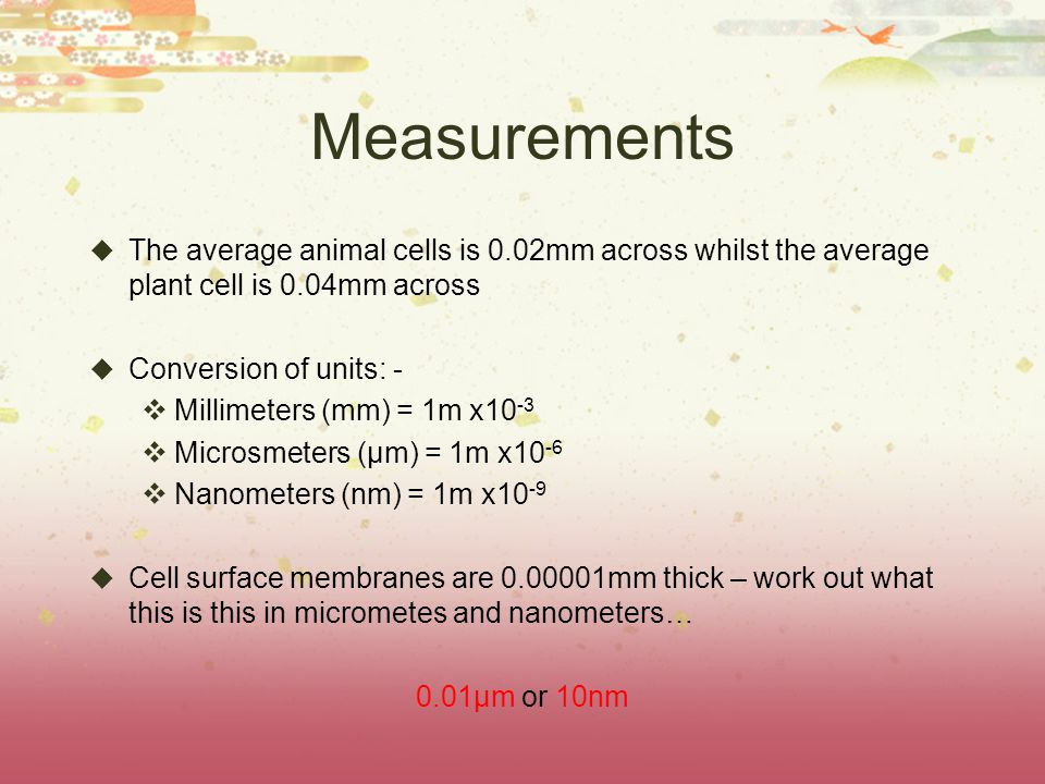 Measurements  The average animal cells is 0.02mm across whilst the average plant cell is 0.04mm across  Conversion of units: -  Millimeters (mm) = 1m x10 -3  Microsmeters (μm) = 1m x10 -6  Nanometers (nm) = 1m x10 -9  Cell surface membranes are 0.00001mm thick – work out what this is this in micrometes and nanometers… 0.01μm or 10nm