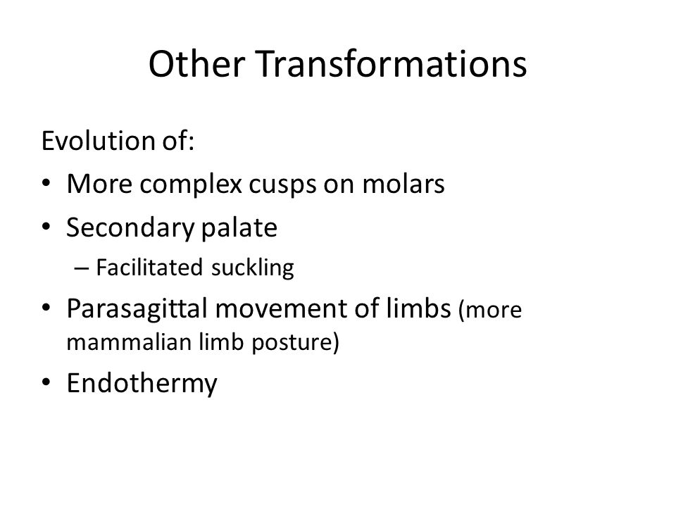 Other Transformations Evolution of: More complex cusps on molars Secondary palate – Facilitated suckling Parasagittal movement of limbs (more mammalia