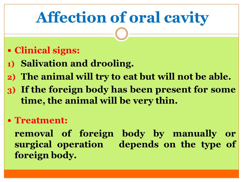 Affection of oral cavity Clinical signs: 1) Salivation and drooling. 2) The animal will try to eat but will not be able. 3) If the foreign body has be