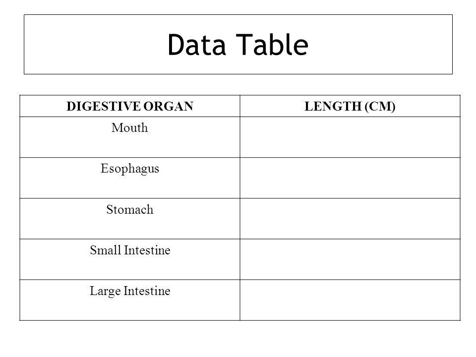 Data Table DIGESTIVE ORGANLENGTH (CM) Mouth Esophagus Stomach Small Intestine Large Intestine