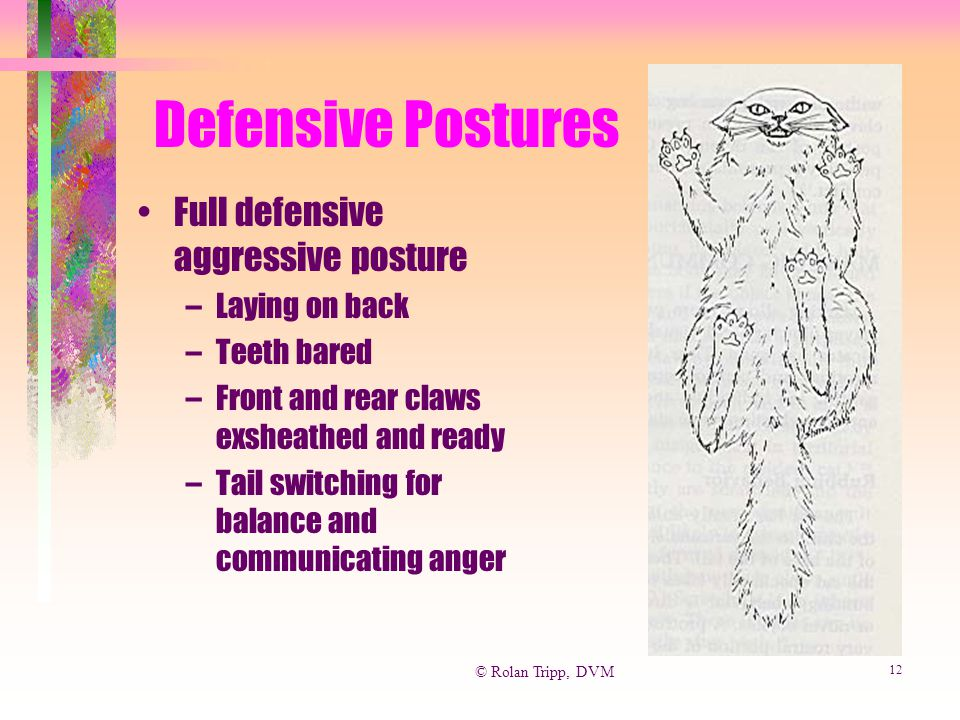 © Rolan Tripp, DVM 12 Defensive Postures Full defensive aggressive posture –Laying on back –Teeth bared –Front and rear claws exsheathed and ready –Ta