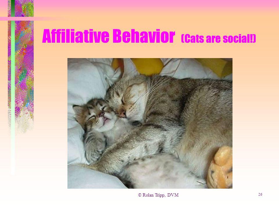 © Rolan Tripp, DVM 26 Affiliative Behavior (Cats are social!)