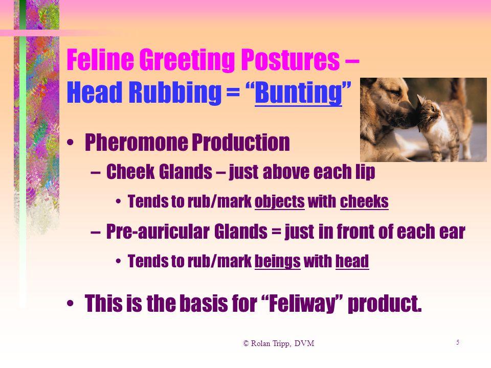 © Rolan Tripp, DVM 6 Feliway Feline Facial Pheromone Analog … Changes the site from a urine mark target to a cheek mark target Calming effect.
