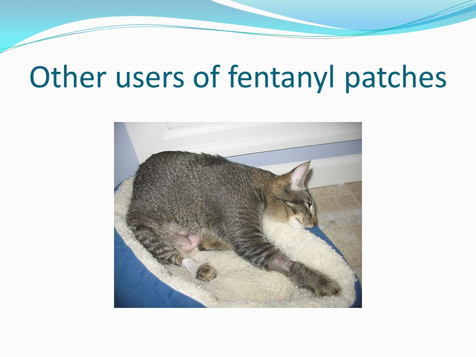 Other users of fentanyl patches