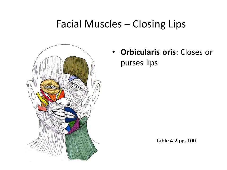 Facial Muscles – Closing Lips Orbicularis oris: Closes or purses lips Table 4-2 pg. 100
