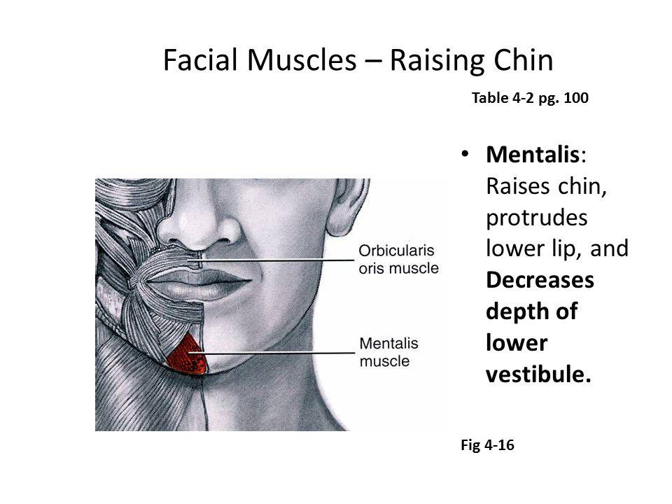 Facial Muscles – Raising Chin Mentalis: Raises chin, protrudes lower lip, and Decreases depth of lower vestibule. Table 4-2 pg. 100 Fig 4-16