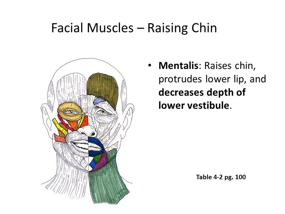 Facial Muscles – Raising Chin Mentalis: Raises chin, protrudes lower lip, and decreases depth of lower vestibule. Table 4-2 pg. 100