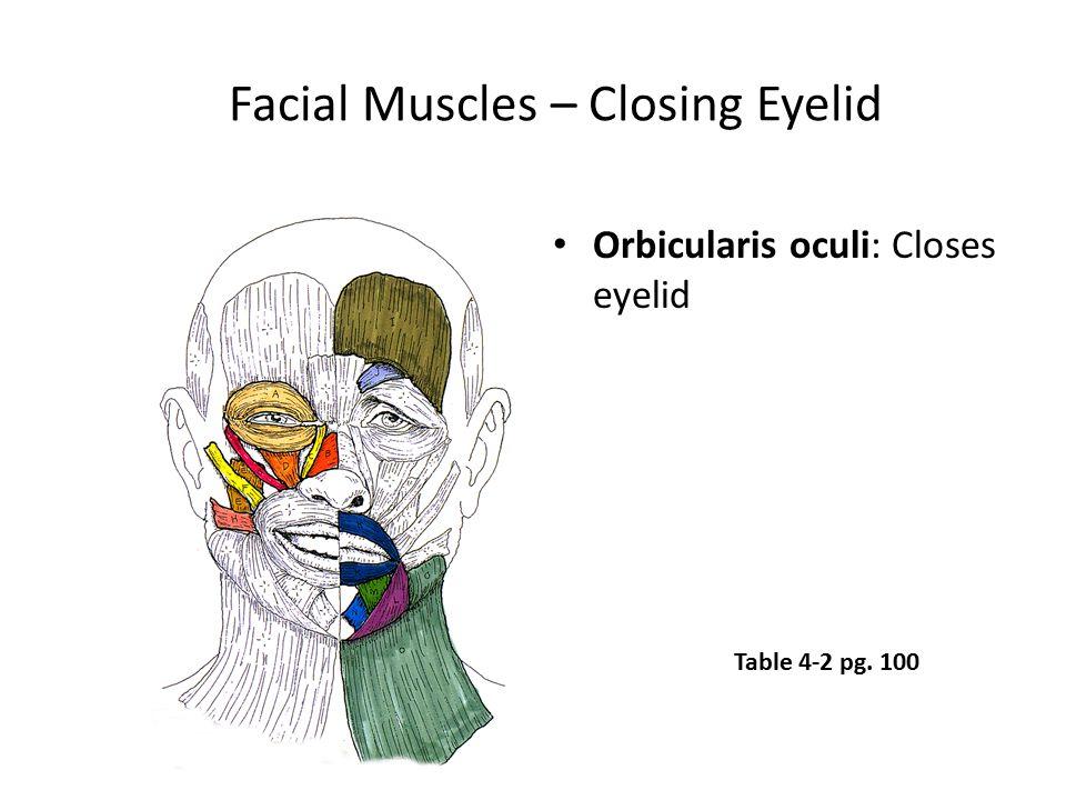 Facial Muscles – Closing Eyelid Orbicularis oculi: Closes eyelid Table 4-2 pg. 100