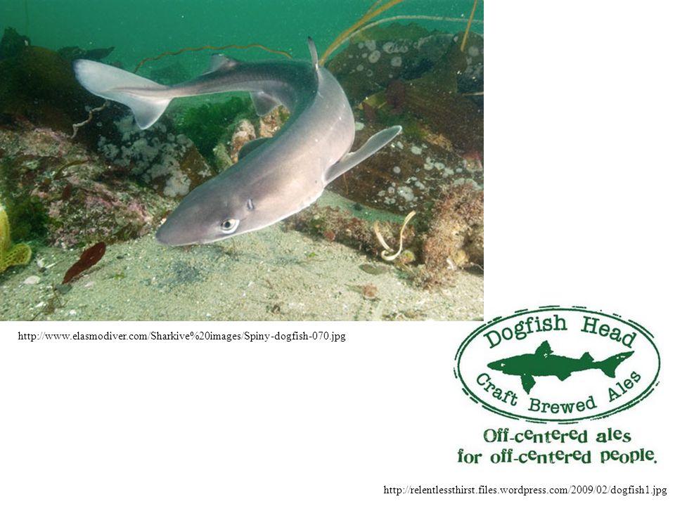 http://relentlessthirst.files.wordpress.com/2009/02/dogfish1.jpg http://www.elasmodiver.com/Sharkive%20images/Spiny-dogfish-070.jpg