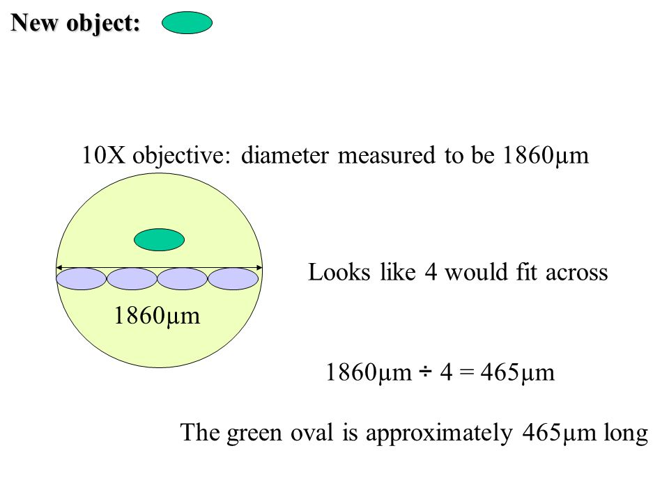 New object: 10X objective: diameter measured to be 1860µm 1860µm Looks like 4 would fit across 1860µm ÷ 4 = 465µm The green oval is approximately 465µ