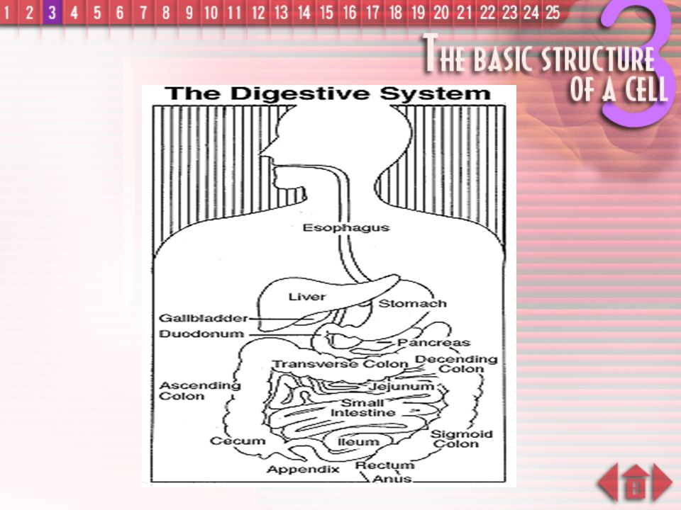 System in our body examples of systems :  Digestive System  Respiratory System  Circulatory System  Nervous System  Reproductive System
