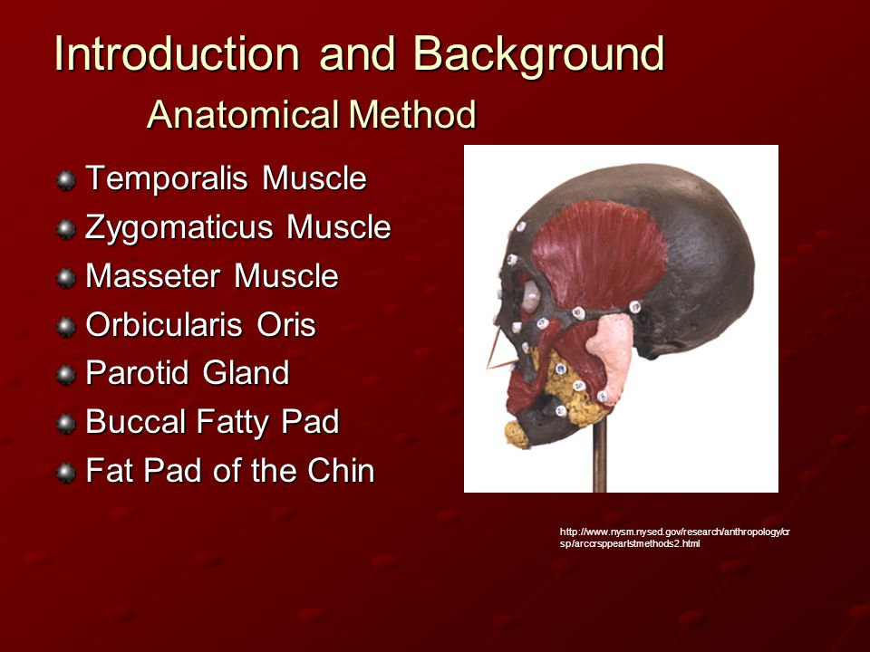Introduction and Background Anatomical Method Temporalis Muscle Zygomaticus Muscle Masseter Muscle Orbicularis Oris Parotid Gland Buccal Fatty Pad Fat