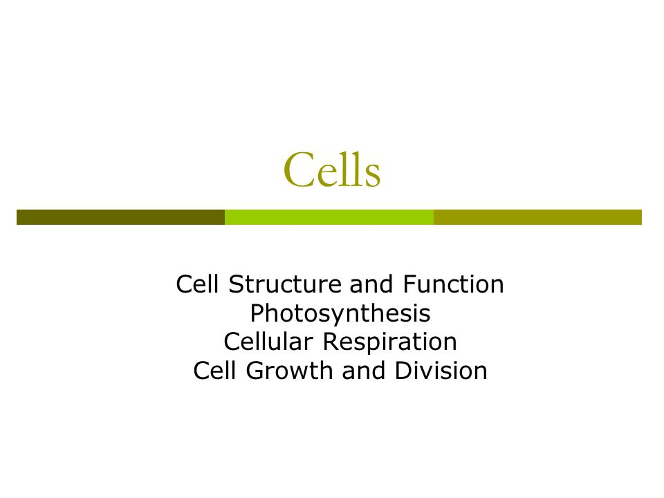 Cell Structure and Function (Chapter 7)