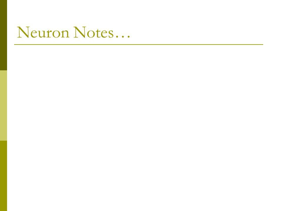 Neuron Notes…