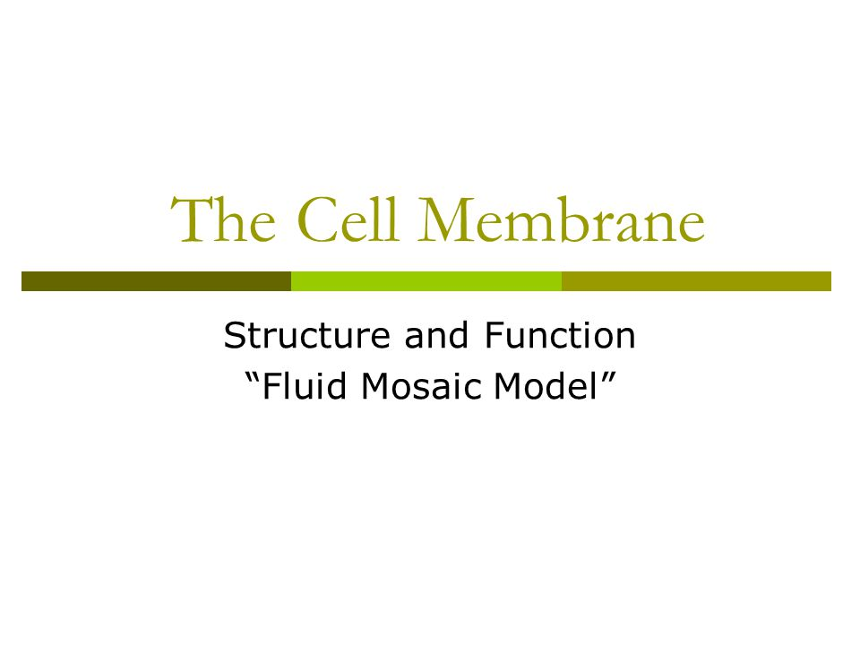"""The Cell Membrane Structure and Function """"Fluid Mosaic Model"""""""