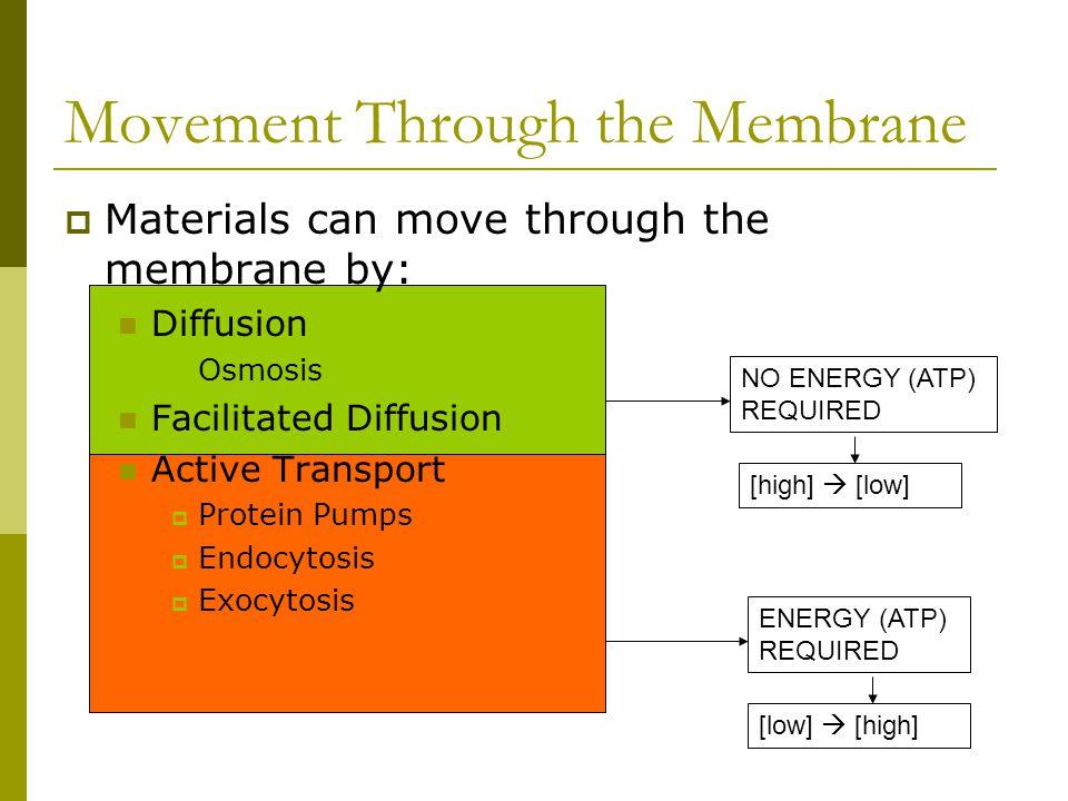 Movement Through the Membrane NO ENERGY (ATP) REQUIRED ENERGY (ATP) REQUIRED [high]  [low] [low]  [high]  Materials can move through the membrane b