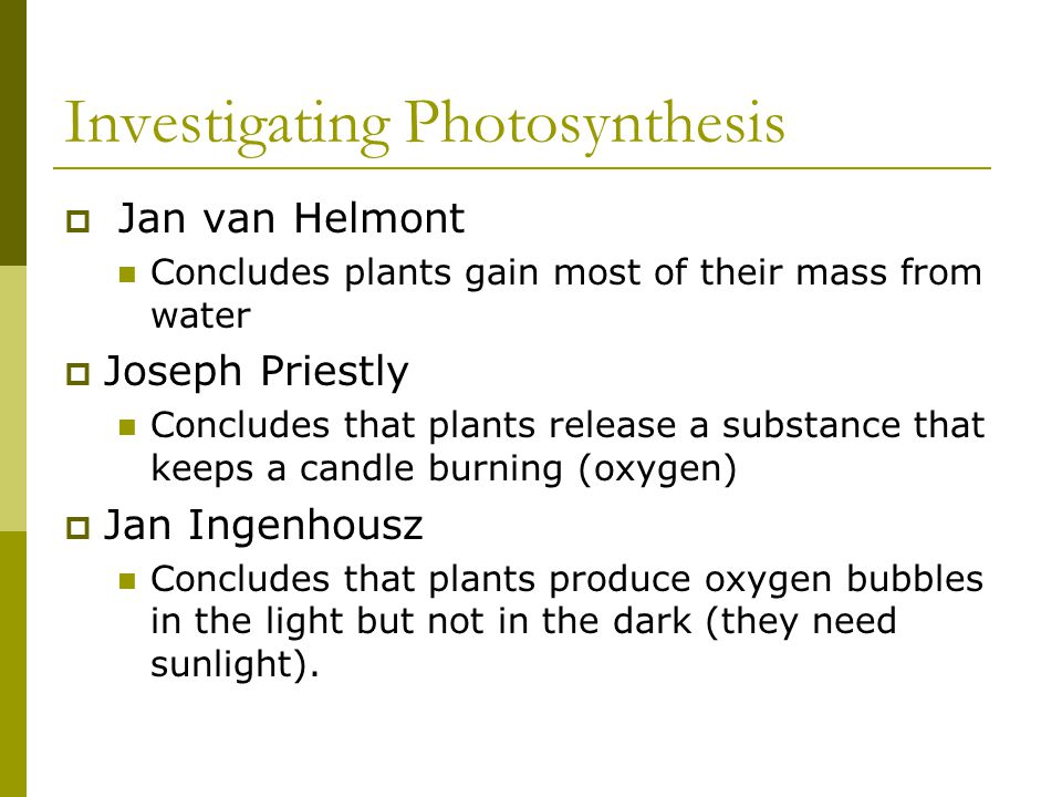 Investigating Photosynthesis  Jan van Helmont Concludes plants gain most of their mass from water  Joseph Priestly Concludes that plants release a s