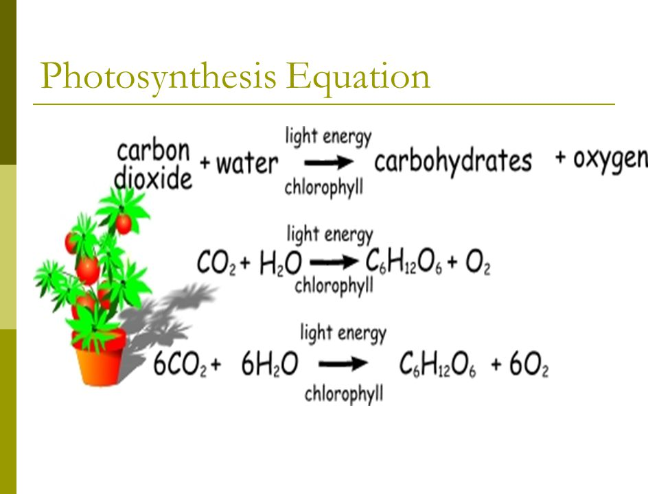 Photosynthesis Equation