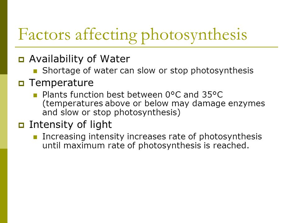 Factors affecting photosynthesis  Availability of Water Shortage of water can slow or stop photosynthesis  Temperature Plants function best between
