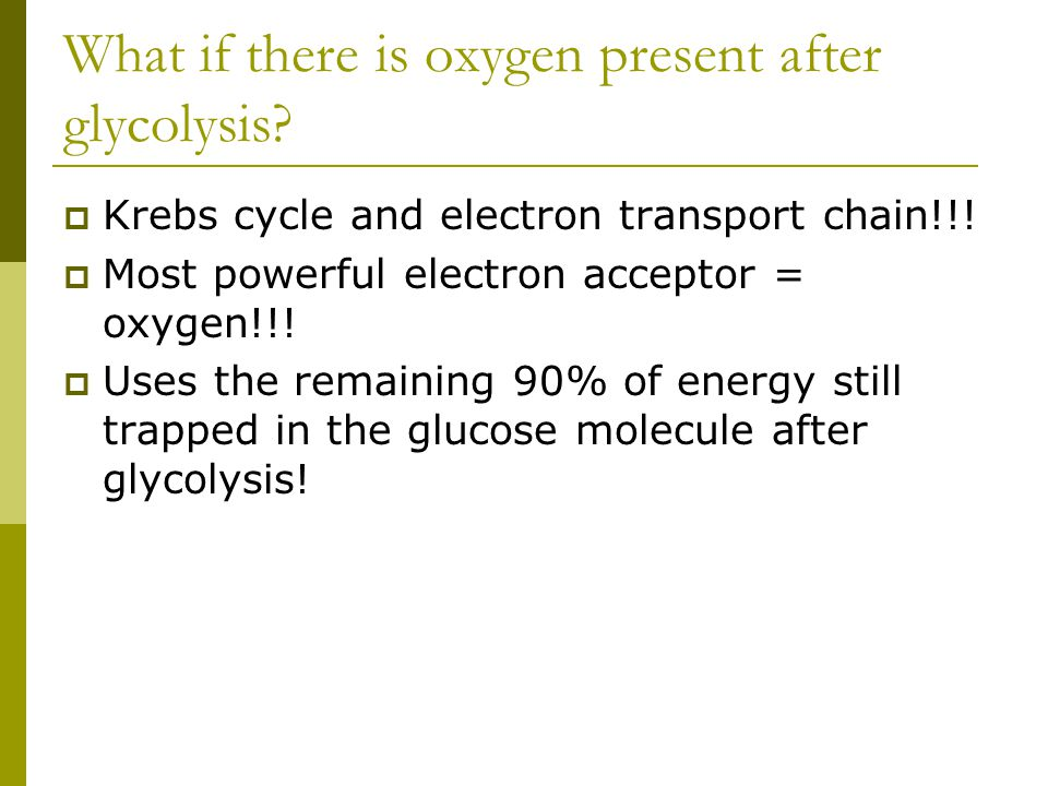 What if there is oxygen present after glycolysis?  Krebs cycle and electron transport chain!!!  Most powerful electron acceptor = oxygen!!!  Uses t
