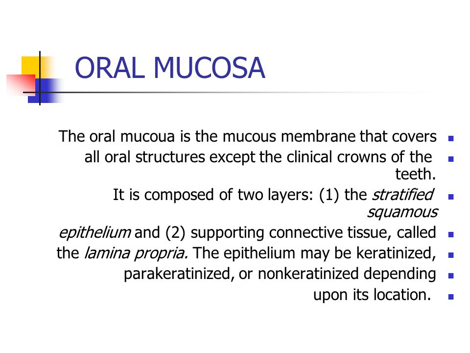 ORAL MUCOSA The oral mucoua is the mucous membrane that covers all oral structures except the clinical crowns of the teeth. It is composed of two laye