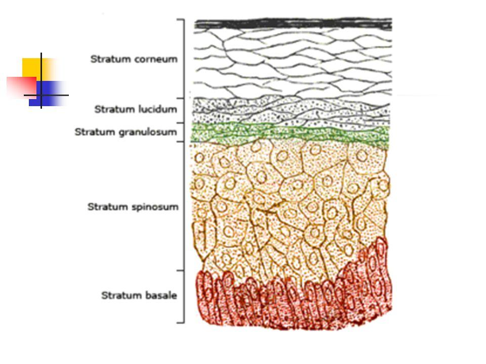 Vesiculopustular lesions due to: Varicella