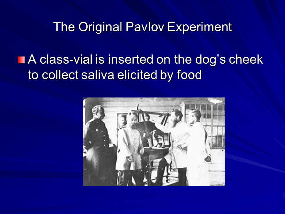 The Original Pavlov Experiment A class-vial is inserted on the dog's cheek to collect saliva elicited by food