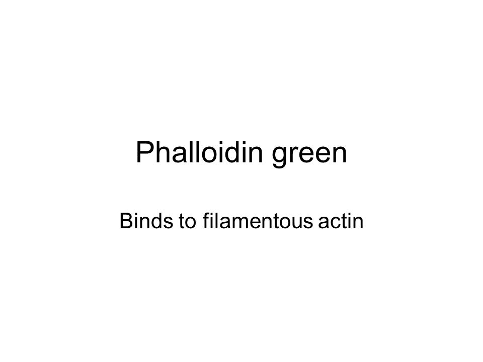 Phalloidin green Binds to filamentous actin