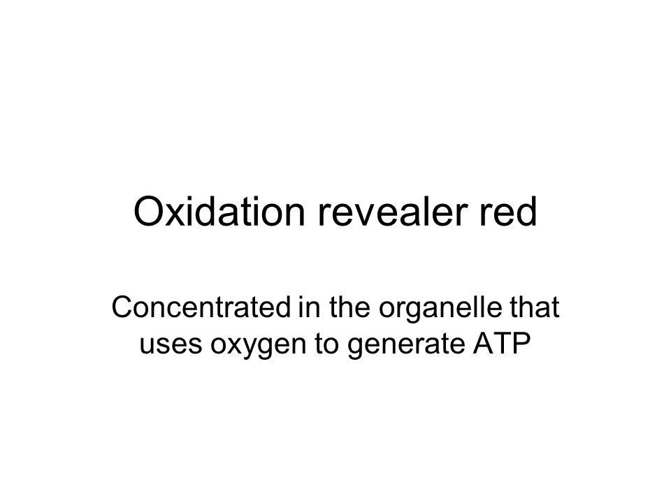 Oxidation revealer red Concentrated in the organelle that uses oxygen to generate ATP