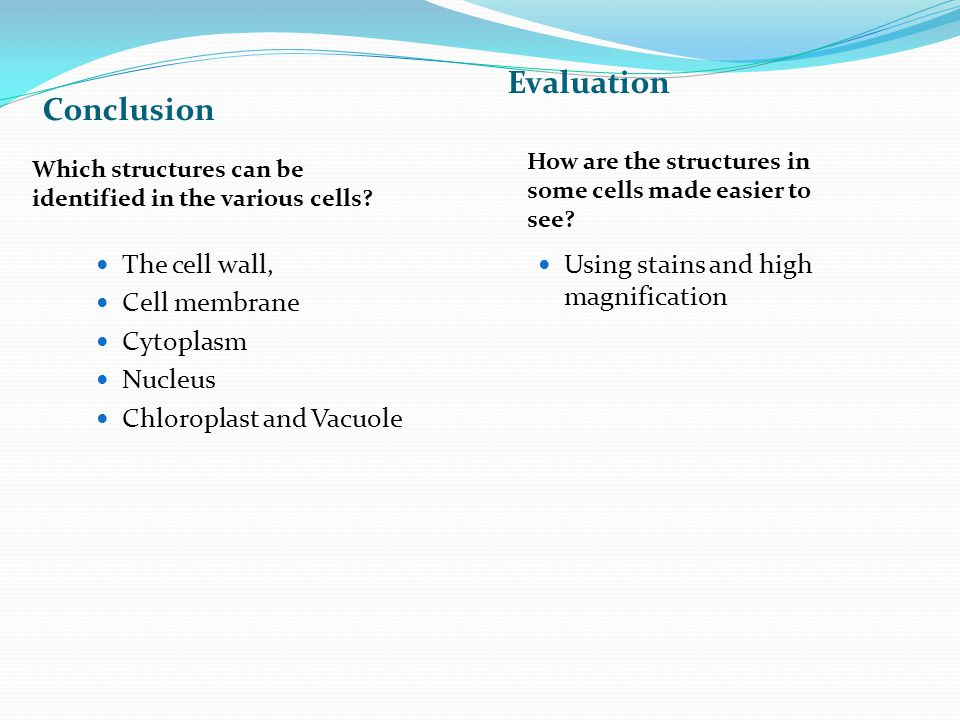 Conclusion Evaluation The cell wall, Cell membrane Cytoplasm Nucleus Chloroplast and Vacuole Using stains and high magnification Which structures can be identified in the various cells.