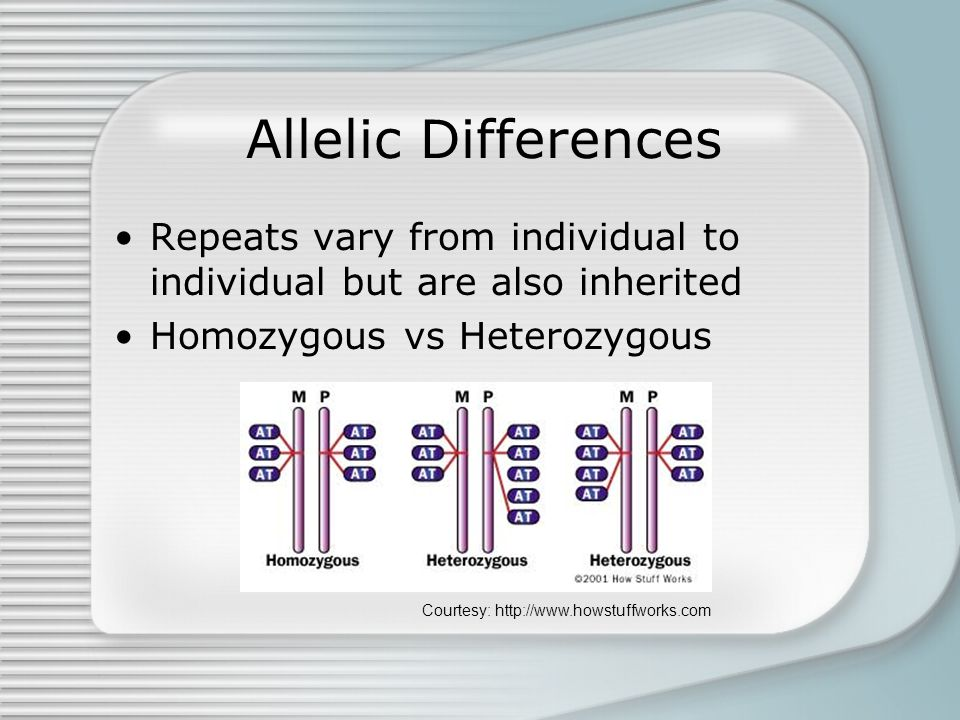 Allelic Differences Repeats vary from individual to individual but are also inherited Homozygous vs Heterozygous Courtesy: http://www.howstuffworks.com