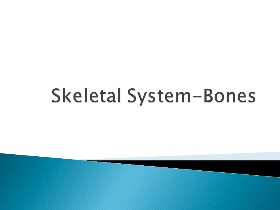  Vertebral column, ribs, sternum and skull