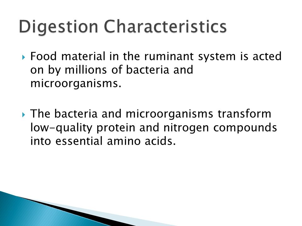  Food material in the ruminant system is acted on by millions of bacteria and microorganisms.