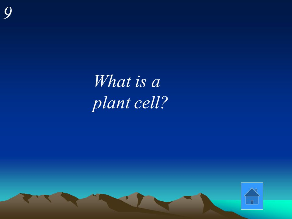 8 This cell type has a cell wall, chloroplasts, and often a big vacuole.