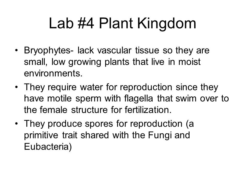 Lab #4 Plant Kingdom Bryophytes- lack vascular tissue so they are small, low growing plants that live in moist environments.