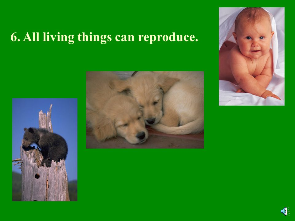 5. All living things respond to their surroundings.