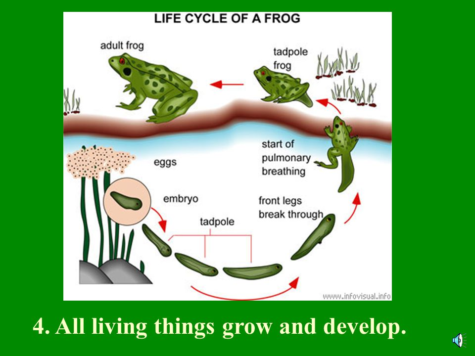 4. All living things grow and develop.