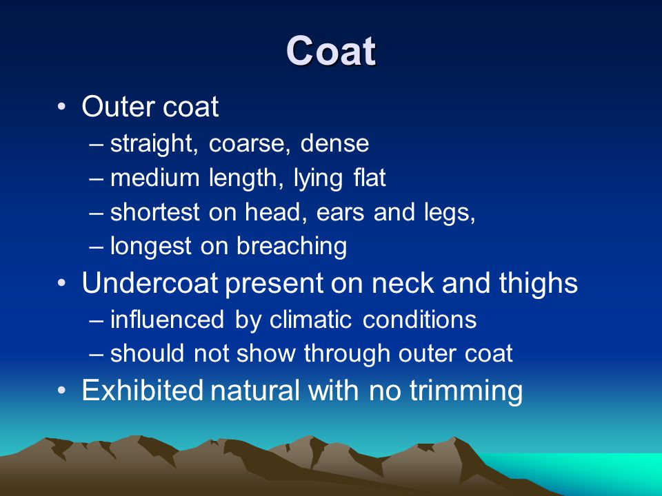 Coat Outer coat –straight, coarse, dense –medium length, lying flat –shortest on head, ears and legs, –longest on breaching Undercoat present on neck and thighs –influenced by climatic conditions –should not show through outer coat Exhibited natural with no trimming
