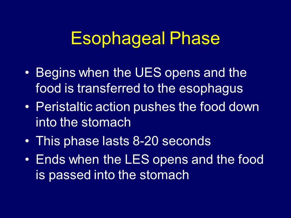 Esophageal Phase Begins when the UES opens and the food is transferred to the esophagus Peristaltic action pushes the food down into the stomach This phase lasts 8-20 seconds Ends when the LES opens and the food is passed into the stomach